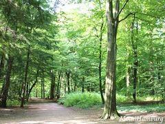 シュタットパークの林